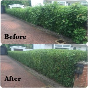 Low Hedge Trim - Before & After