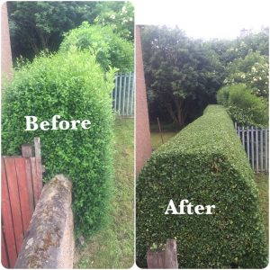 Long Hedge Trimming - Before & After