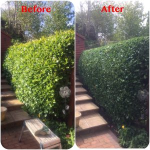 Boundary Hedge Trimming - Before & After