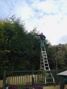 High Hedge Trimming ladders