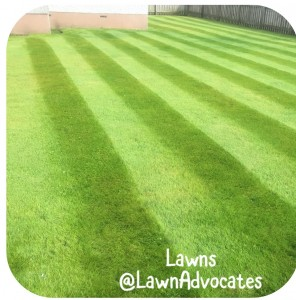 The Lawn Advocates - lawn on home page