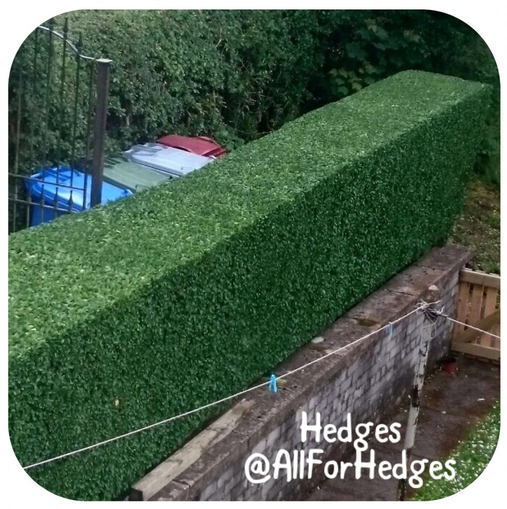 hedges All For Hedges