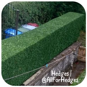 All For Hedges - Gardening Services in East Kilbride