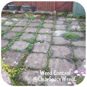 Clear Space Weed Control - weeds on home page
