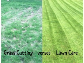 Grass Cutting vs Lawn Care