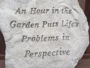 A hour in the garden