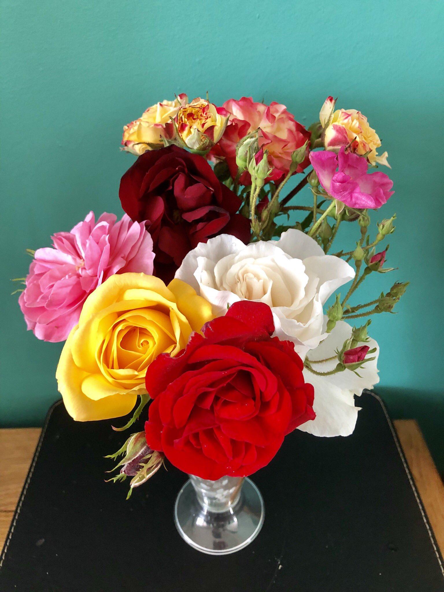 7 Days 7 Roses