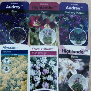 alpine plant labels