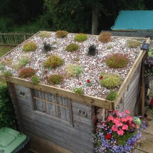 old shed roof garden