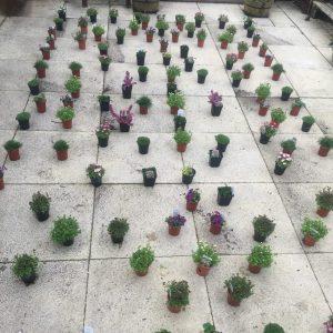 9cm plant pots layout