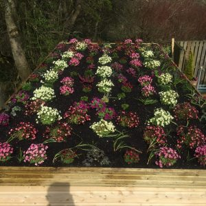 plants on shed roof garden month 3