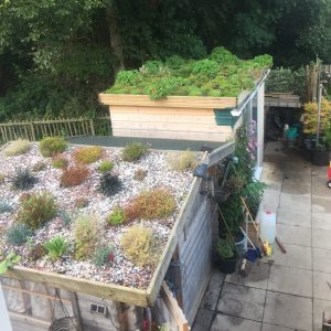 shed roof garden August 2015