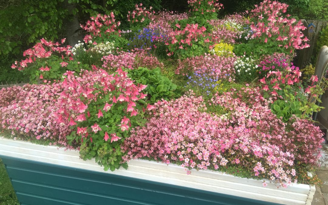 Creating a Shed Roof Garden