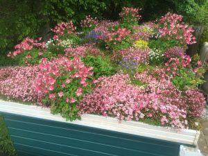 shed roof garden May 2016