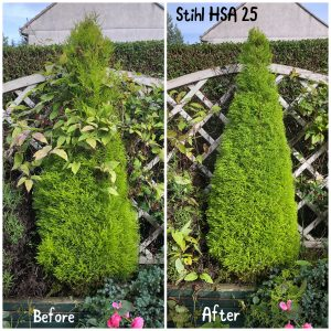Conifer before & after