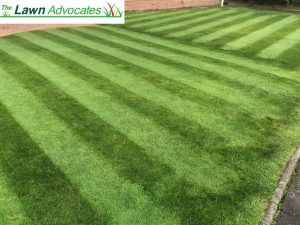 Lawn Weed Treatment landing page