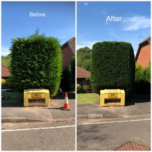 High Hedge trimming - Before & After