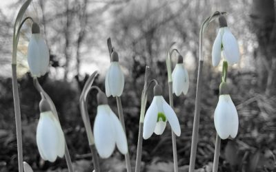 Plants of the Month – February