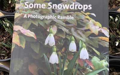 Some Snowdrops – book review