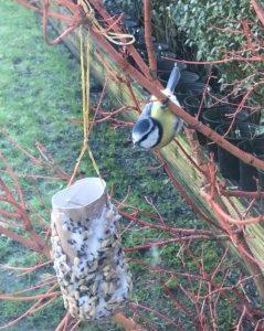 Blue Tit cardboard tube - How to Get Kids Gardening