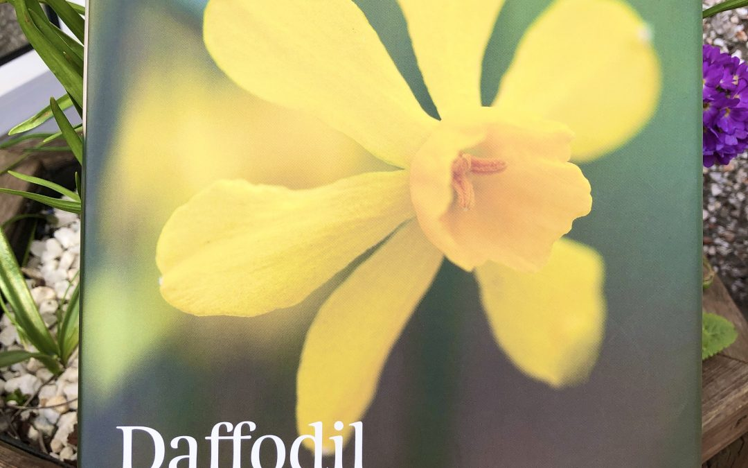 Daffodil – book review