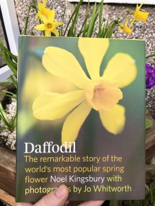 Daffodil book review - front cover